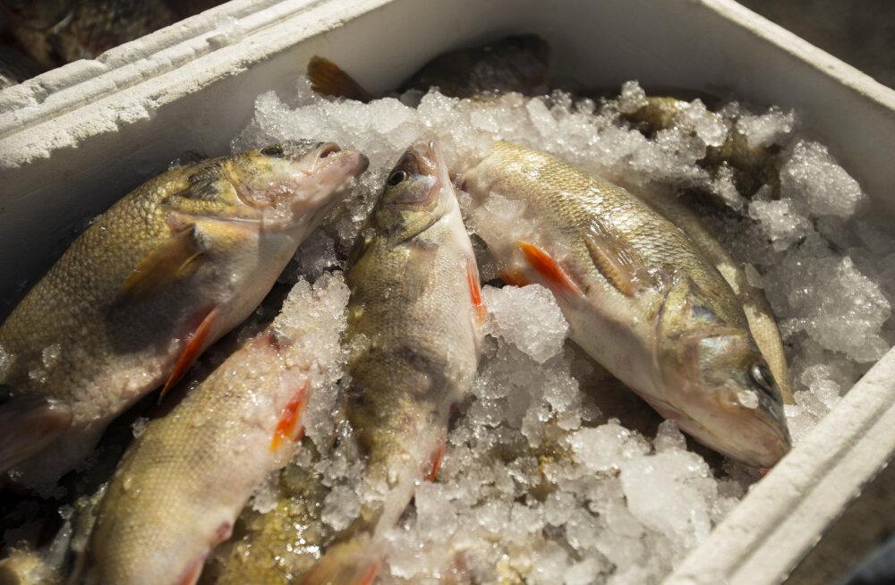 Kalakoka ABC: kuidas püütud kala kojujõudmiseni säilitada