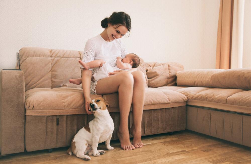 Uuringust selgus, et armastus koerte vastu võib olla pärilik