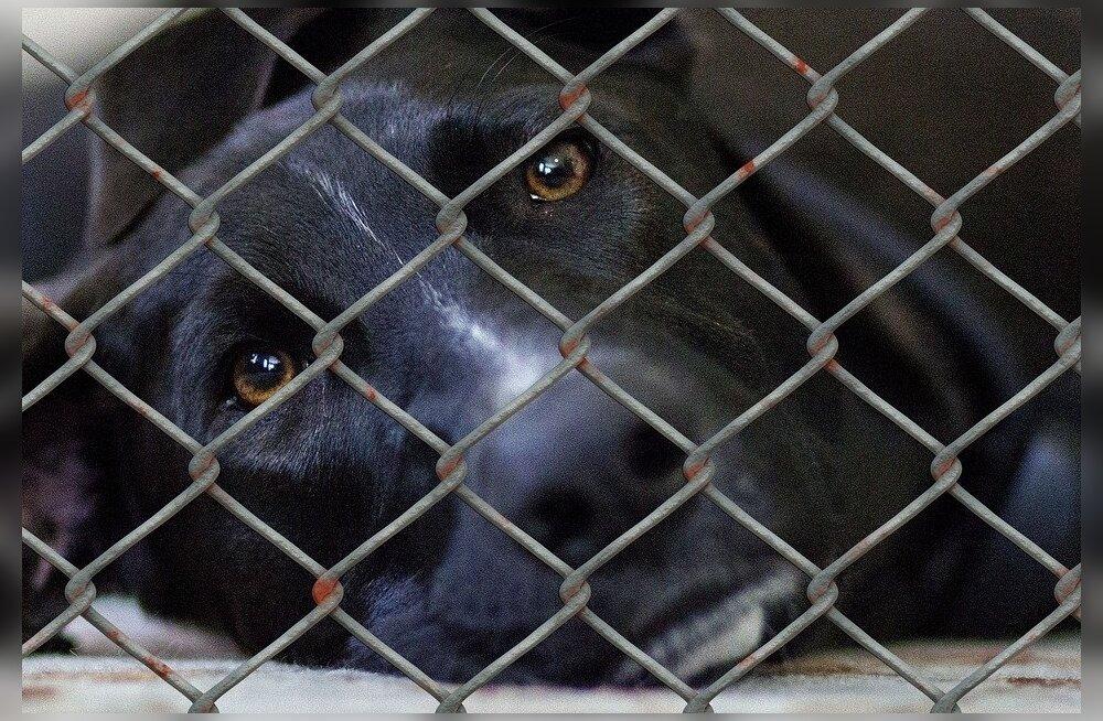 Vancouver keelustas kasside, koerte ja küülikute müügi loomapoodides!