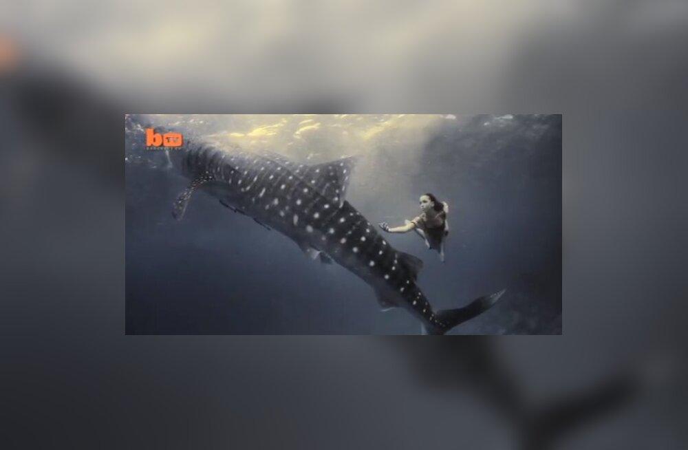 VIDEO: Modellid ujuvad pildistamise käigus koos vaalhaidega