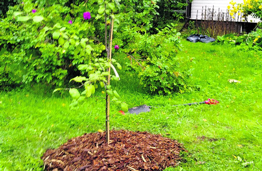 Istutame uue viljapuu