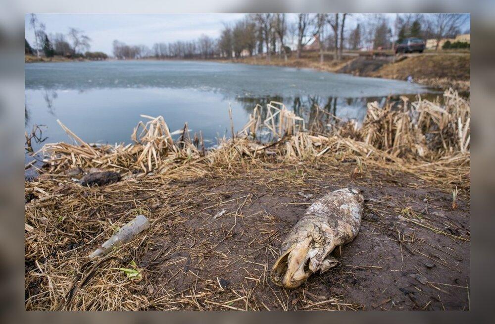 Madal veetase ja paks jääkiht hukutasid järvedes kalu