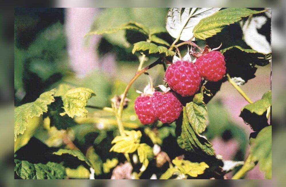 Õige aeg anda taimedele sügisväetist