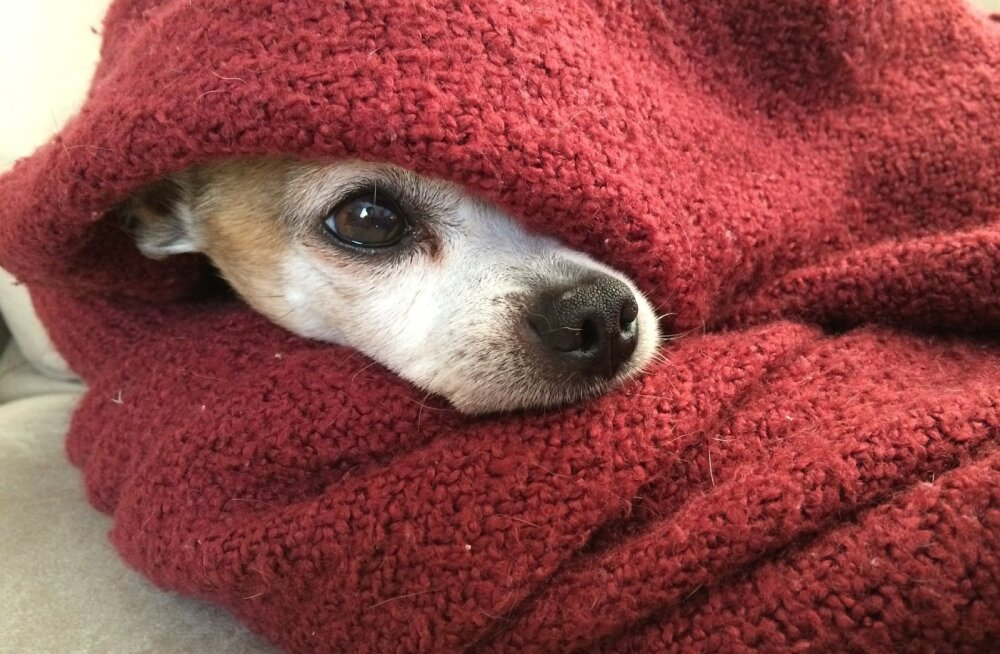Ootamatu talveilm: kas minu koer vajab talvejopet?