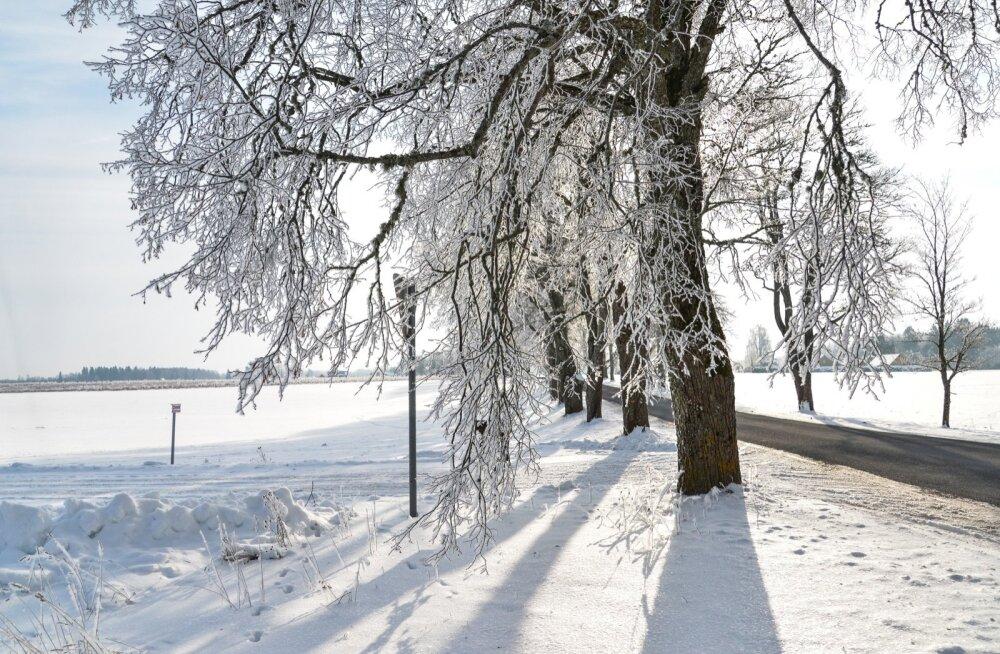 Talvine loodus Viljandimaal