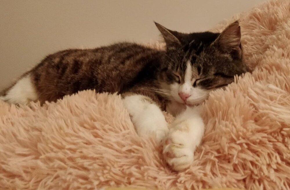 Tripsu lugu: pailembeline ja sõbralik kodukass osutus üleliigseks: kass visati loomalauta ja jäeti saatuse hoolde
