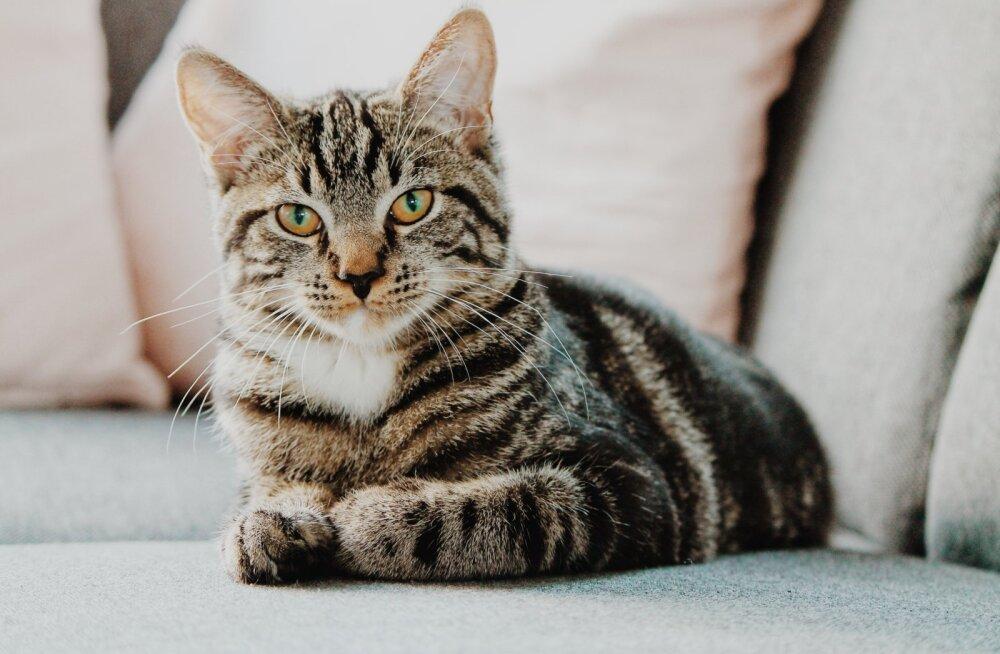 Seitse põhjust, miks peaksid võtma kassi: nad on parimad kaaslased
