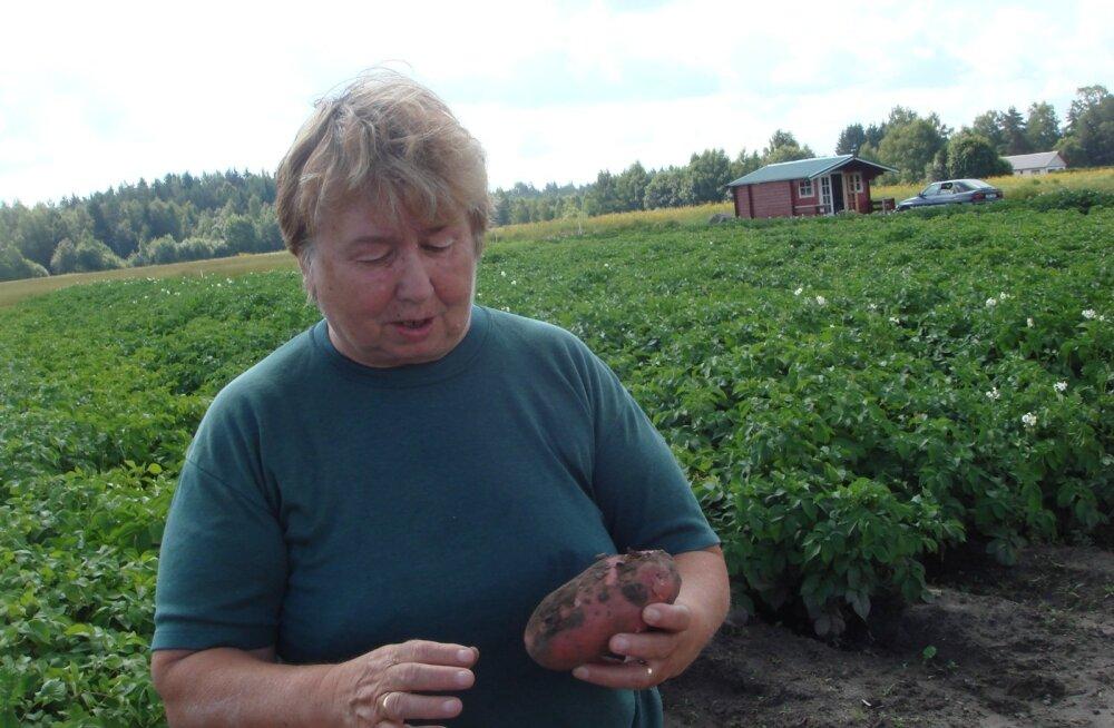 Kartuliteadlane Luule Tartlan on tänavusest kartulist juba kärna leidnud.