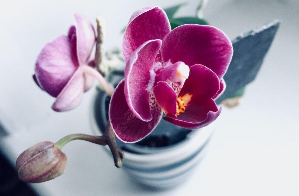 Orhideed pimedal ajal: 7 sammu kaunite õiteni