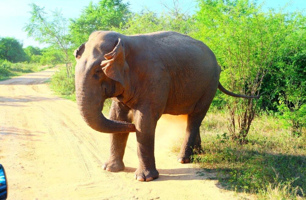 KaseCampers Sri Lankas 2