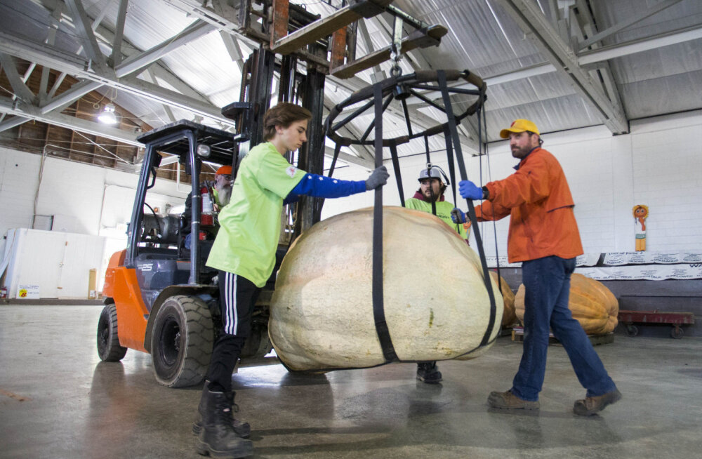 ФОТО | Где выращивают самые большие тыквы в мире?