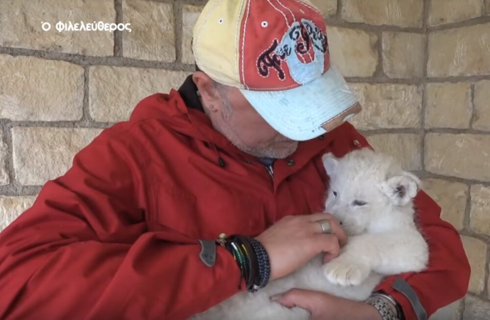 FOTOD | Küprose loomaaias sündis imearmas valge lõvikutsikas