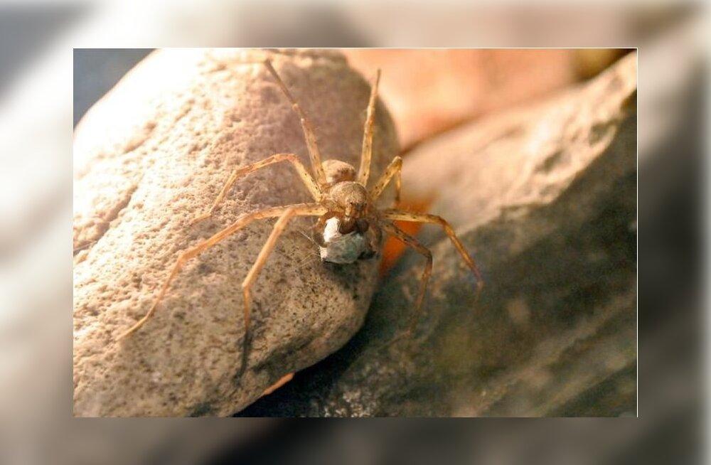 Ka emased ämblikud armastavad kaunilt pakitud kinke