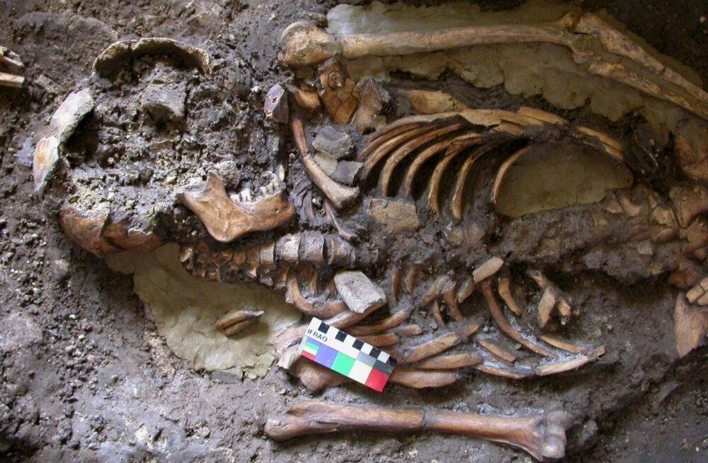 Gruusiast leiti eurooplaste esivanemate neljas, senitundmatu ürgliin