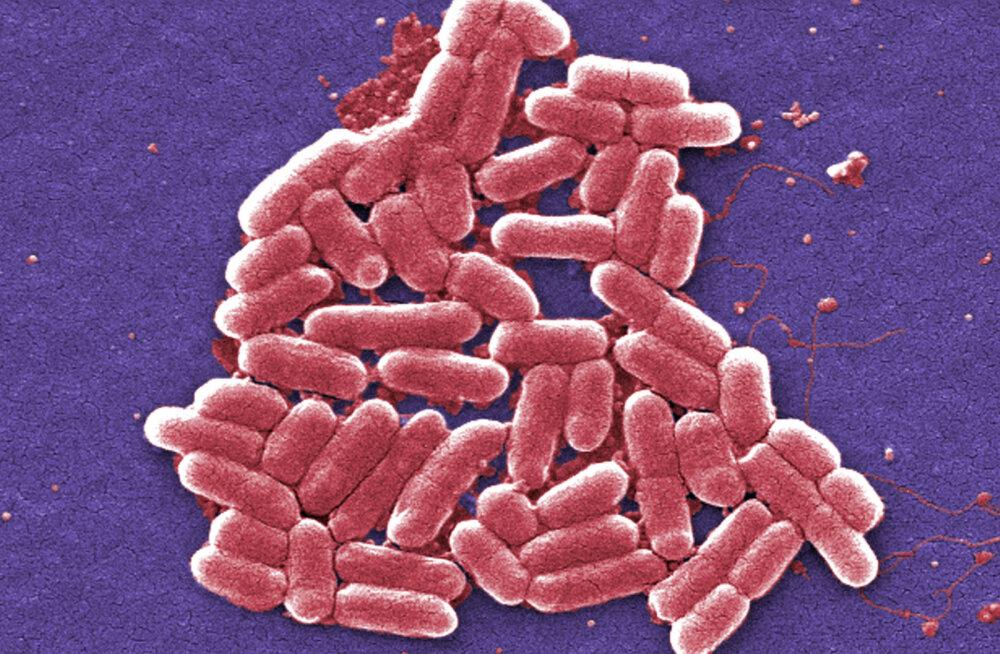 Teadlaste avastus võimaldab kolibakteri mitmel rindel meie heaks tööle panna