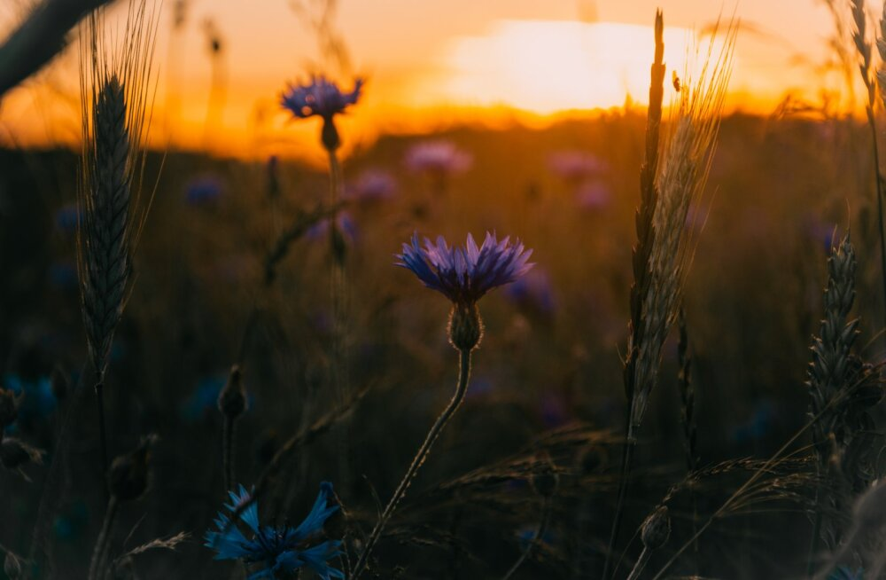 Käes on õige aeg vaadata tagasi kõigele heale ja kasulikule, mida oled seni kogenud ja mõelda, mida tulevikult ootad