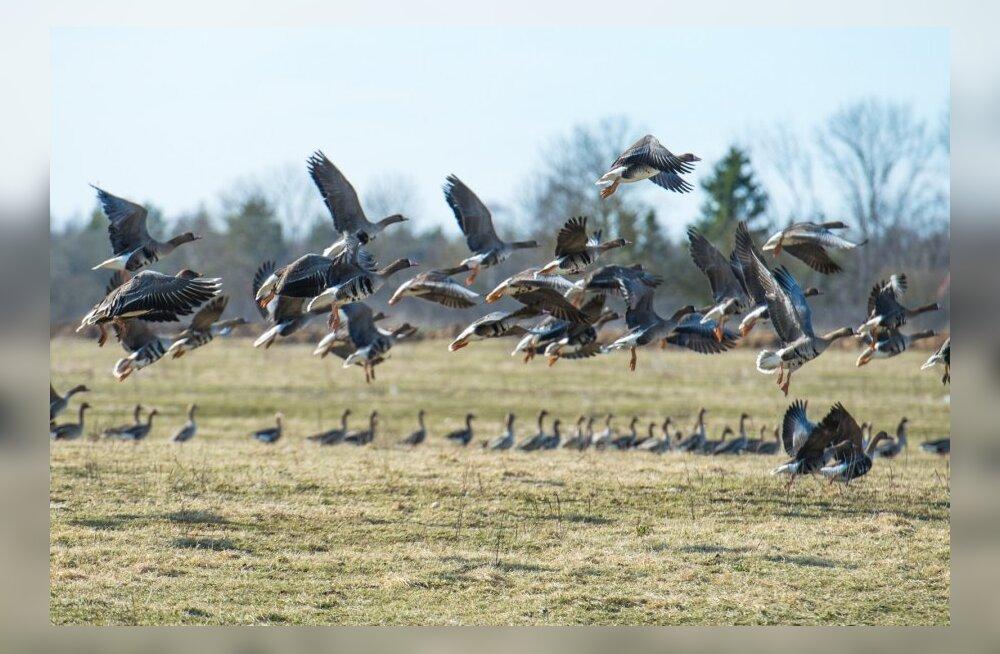 Kumari looduskaitsepreemia pälvis ornitoloog Aivar Leito