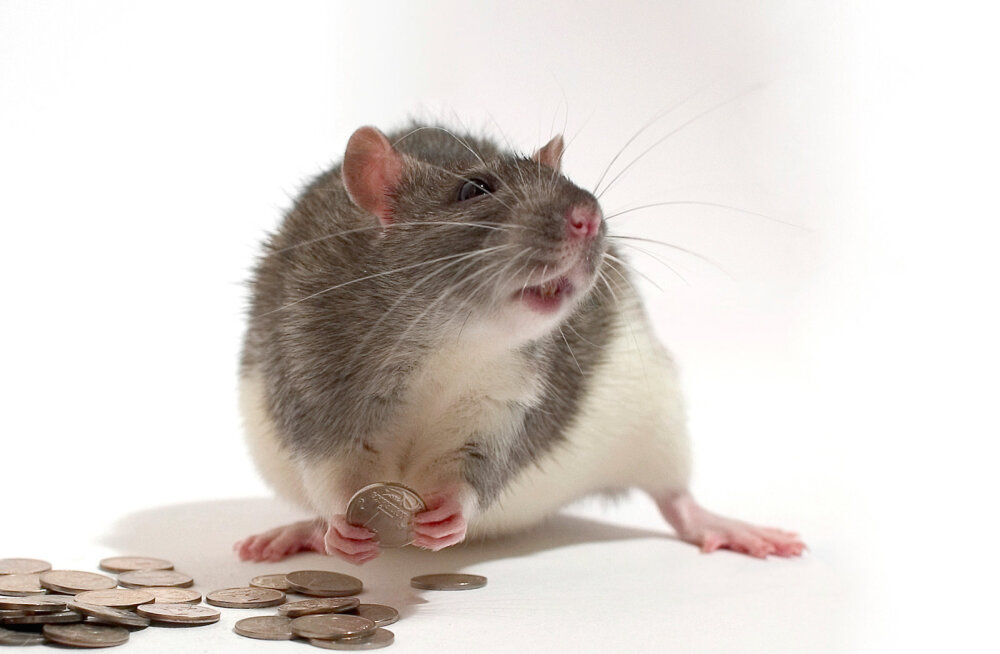 Kassid, tuvid ja rotid on inimesest targemad. Kuidas nii?
