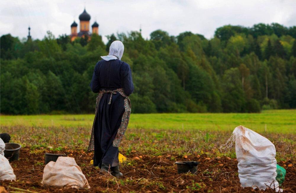 """Чай, откровенные беседы и трактор """"Беларус"""": как проходит сбор картошки на монастырском поле в Куремяэ"""