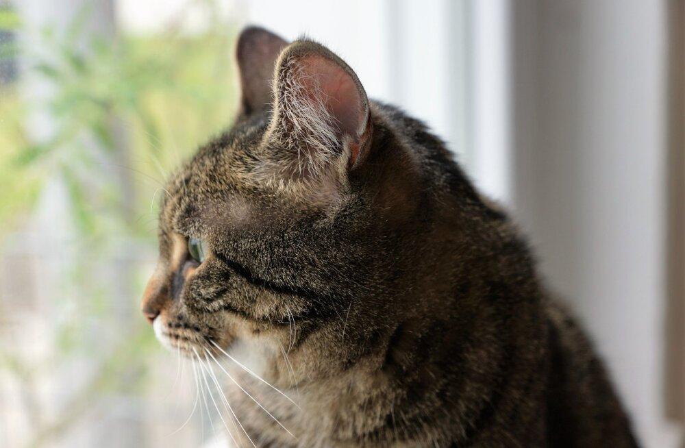 Veendu, et sinu kassiga on kõik hästi: 10 märki, mis viitavad stressile