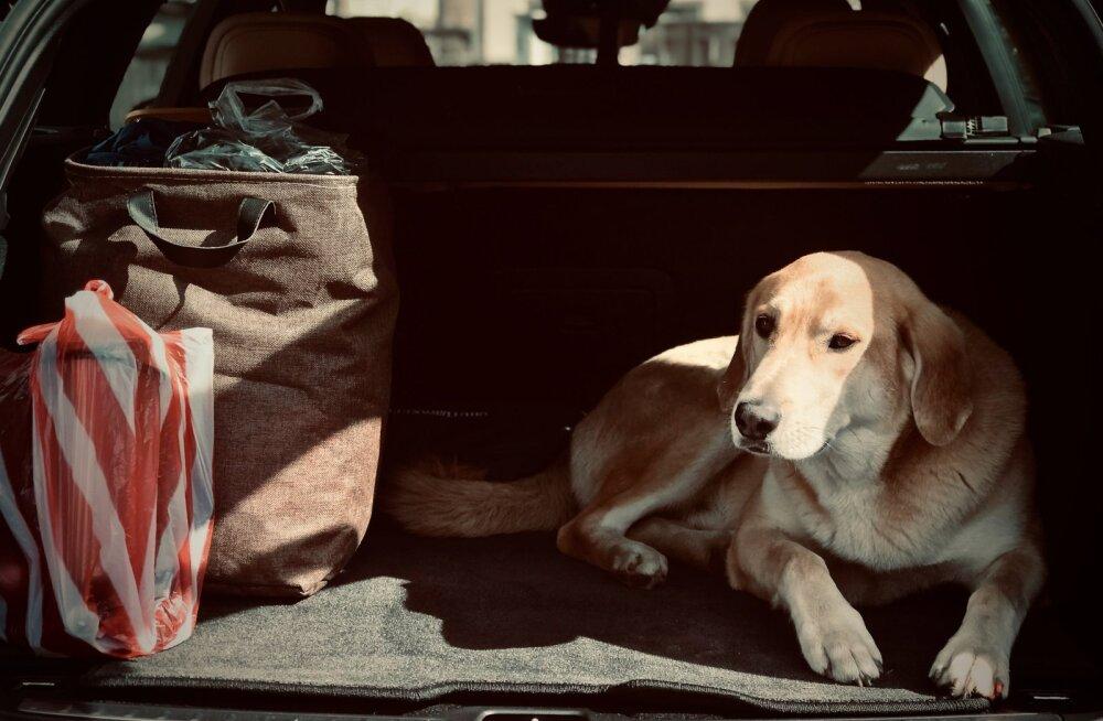 Üllatav ent tõsi: koera või kassi ökoloogiline jalajälg on võrreldav auto omaga