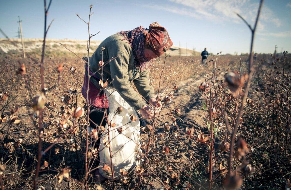 Puuvillakorjaja Usbekistanis.