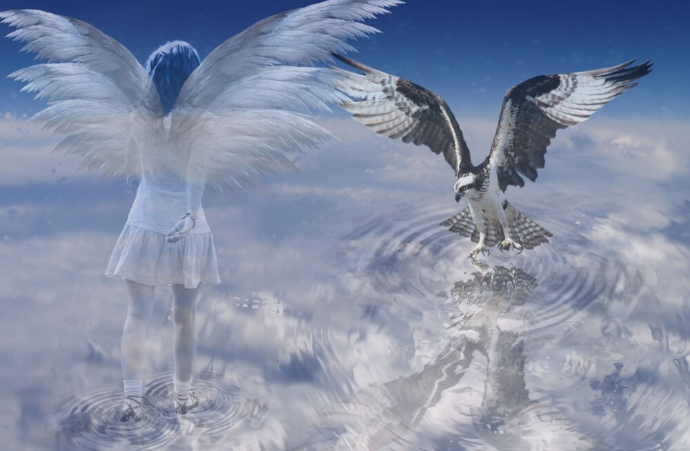 Я свободна, словно птица в небесах, или Где взять уверенность в себе и почему мы смущаемся сами себя?