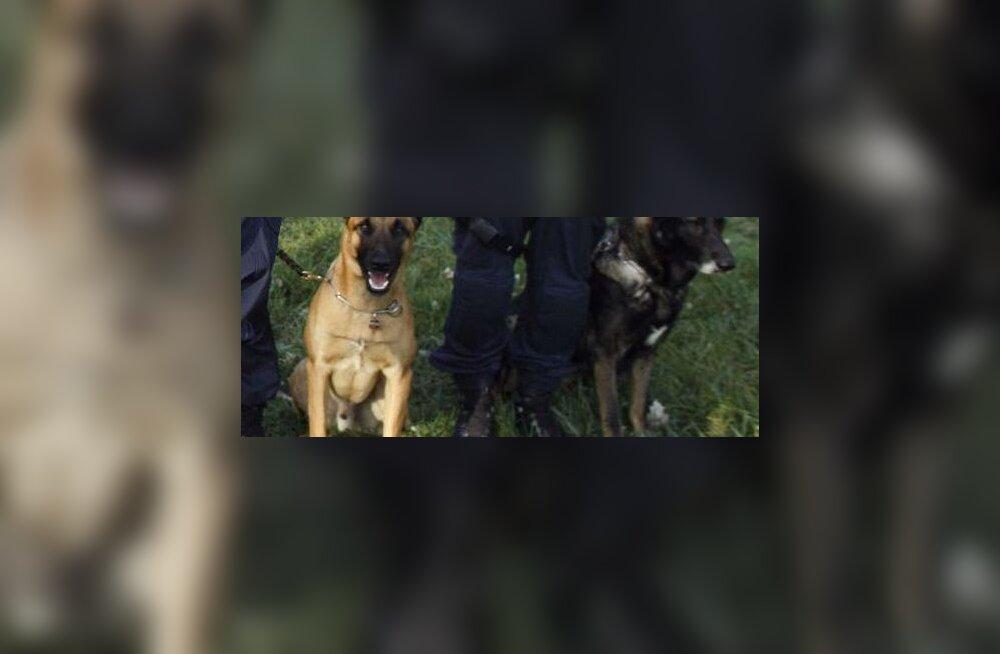 Tuletõrjuja varastas hukkunu jala ja viis oma koerale