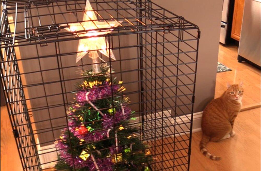 Vaimukad FOTOD | 15 geniaalset viisi, kuidas kaitsta jõulukuuske oma lemmikloomade eest