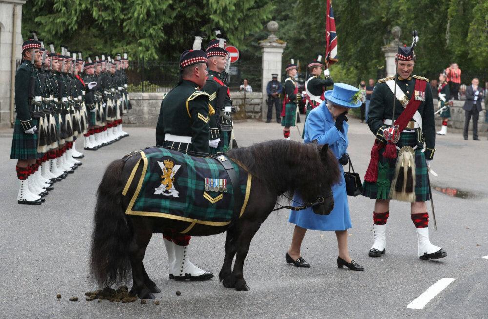 Humoorikas seik! Kuninganna Elizabethi ametlikul tervitusel juhtus ponil aromaatne äpardus