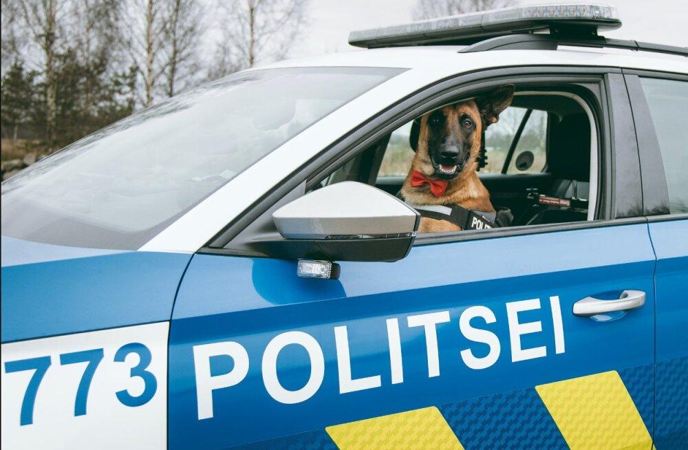 PILTUUDIS   Eesti politsei suure sünnipäeva puhul on ka koerad pidulikus rüüs