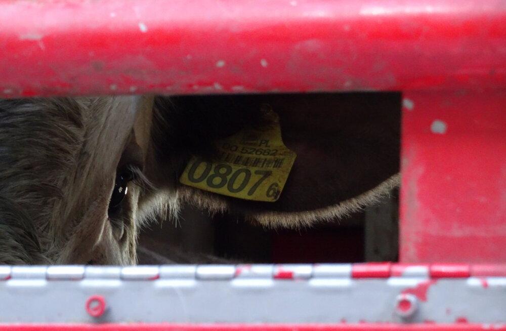 Loomade kaitseks koguti 14 000 allkirja