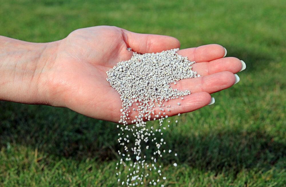 Tavaliselt soovitatakse muru esimest korda väetada siis, kui taimekasv on algamas.