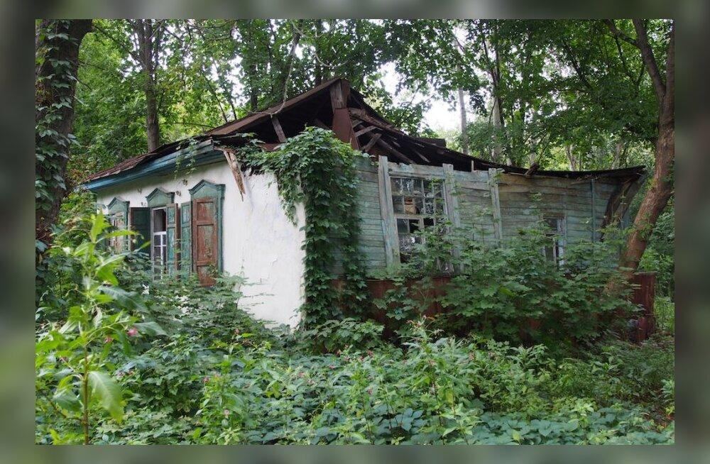 Linnud suudavad taustkiirgusega Tšernobõli keelutsoonis kohaneda