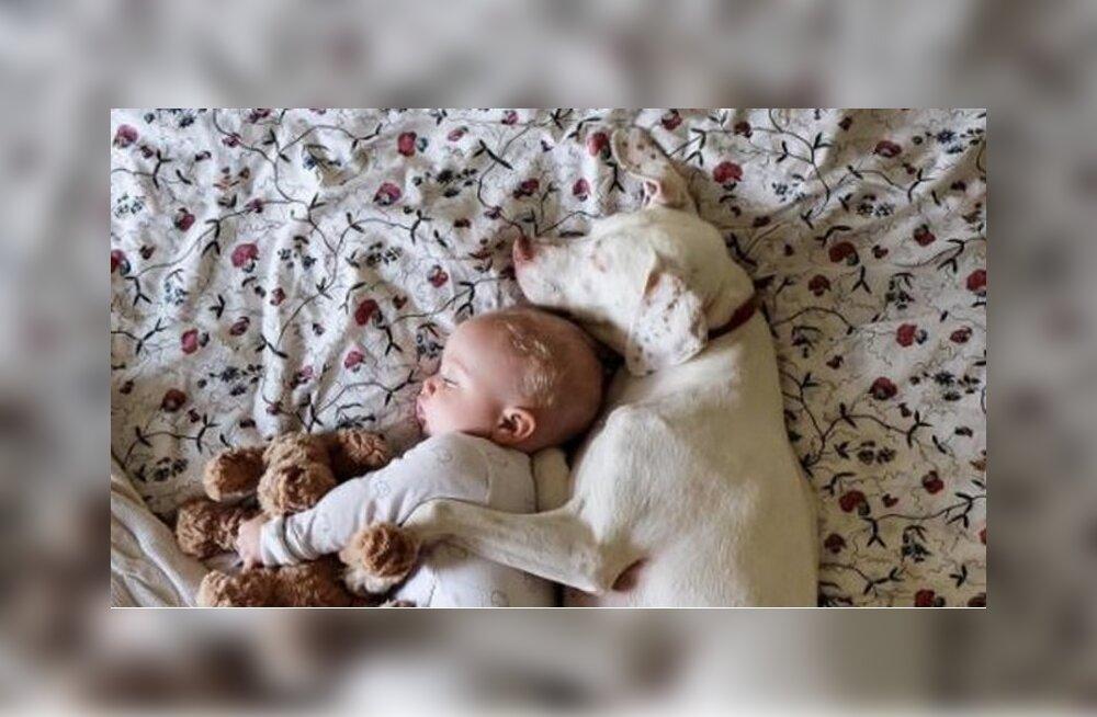 Väärkoheldud koer kardab kõike, peale selle pisikese armsa beebi
