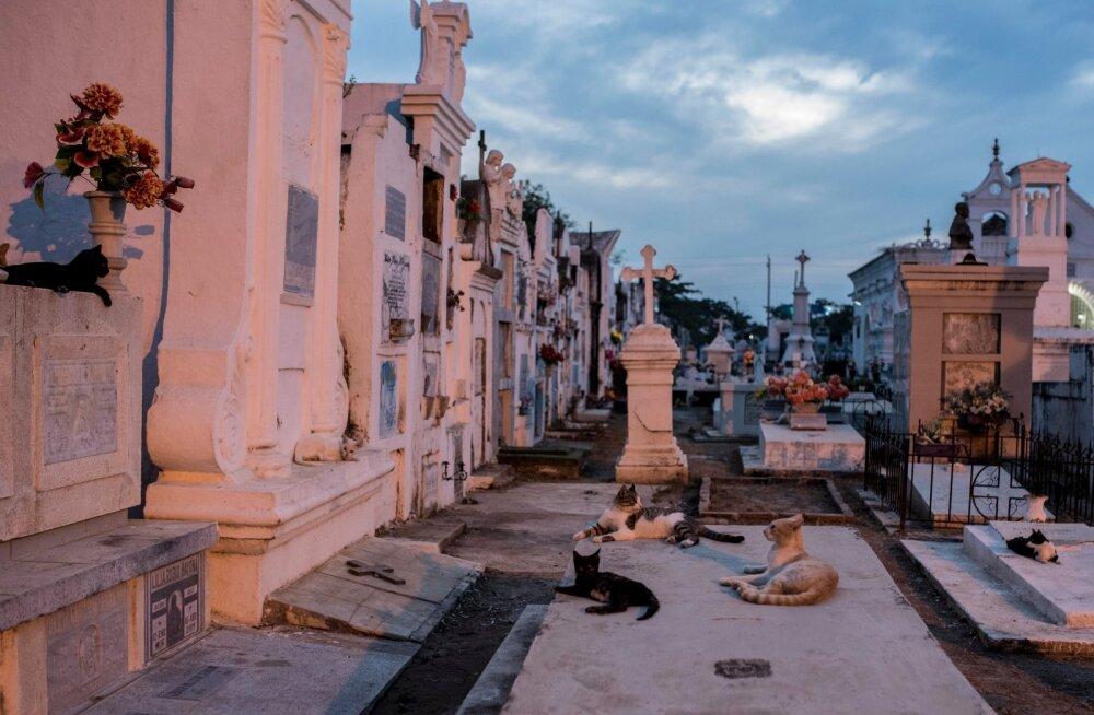 Öisel Mompoxi kalmistul on maagilist realismi kõige enam tunda - väärikate linnakodanike haudadel veedavad aega kümned ja kümned kassid, laskmata end inimeste juuresolekust vähimalgi määral segada.