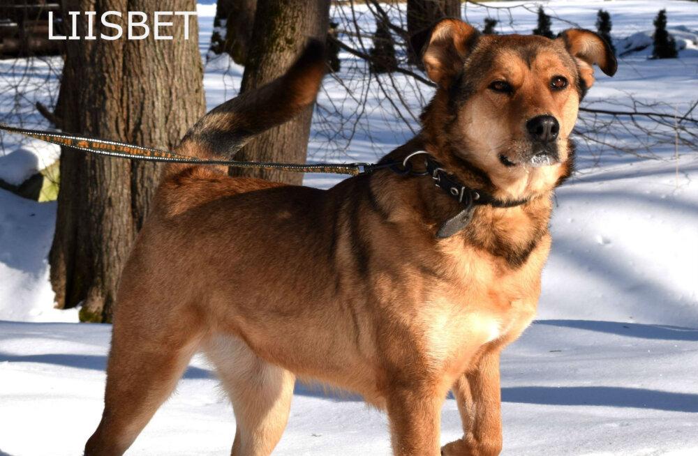 SAA TUTTAVAKS | Eesti äärealadel asuvas külalislahkes varjupaigas on 16 vahvat koera, kes kõik igatsevad vaid armastuse järele