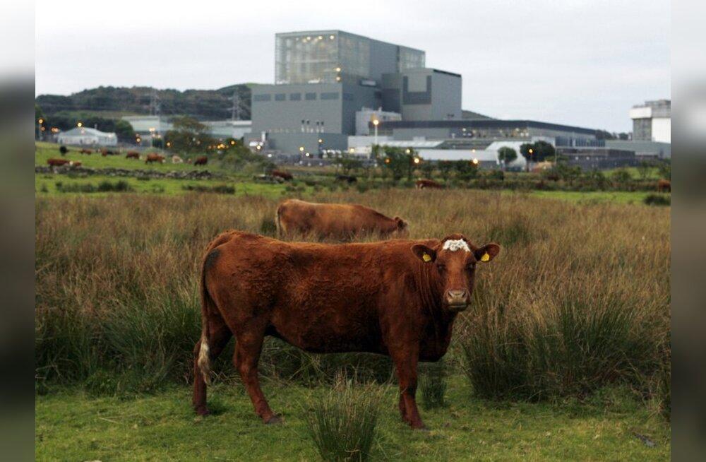 Lehm ja tuumajaam
