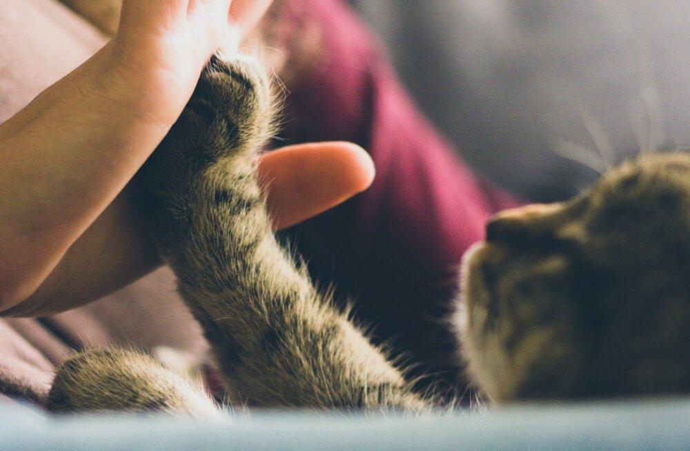 Tõtta appi! Kaheksa soovitust, kuidas närvis kass maha rahustada