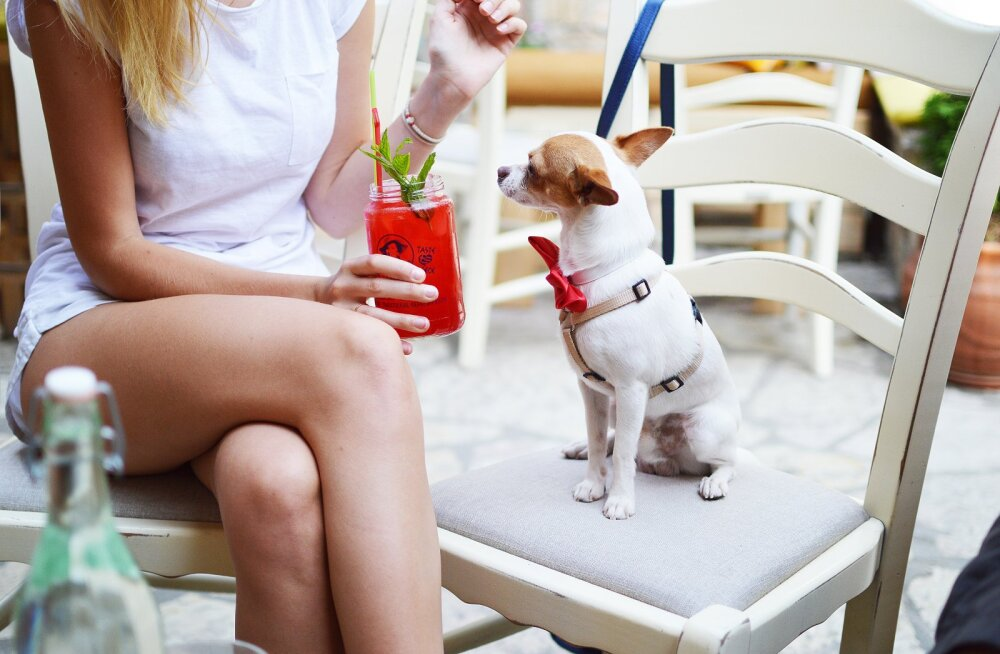 Ära tegutse mõtlematult! Kui otsid endale koera, siis kuula neid koertetreeneri nõuandeid