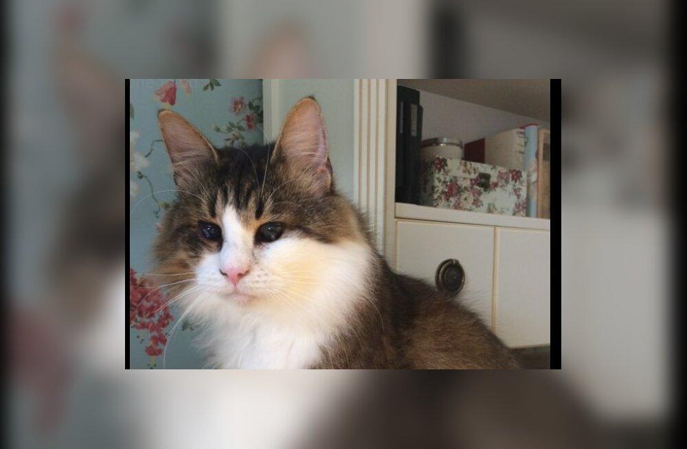 ABIPALVE | Haabneemes läks kaduma pime kass