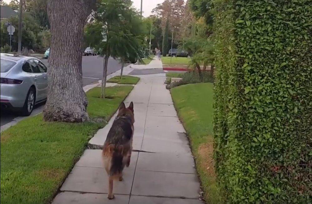 EKSPERIMENT   Kuidas reageerib koer, kui ta saab keset jalutuskäiku ühtäkki aru, et omanikku enam ei olegi