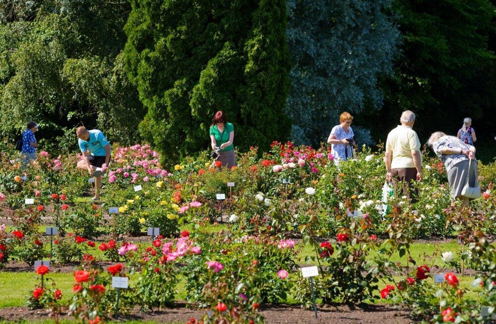 НЕ ПРОПУСТИТЕ! Дни цветущих роз в Таллиннском ботаническом саду