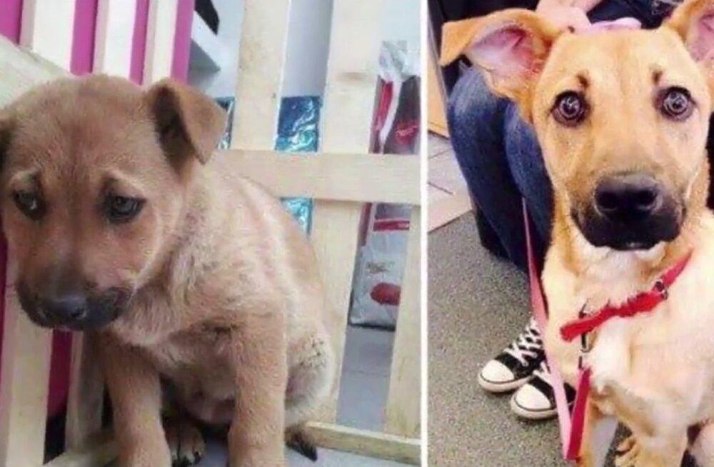 FOTOD: Oh seda õnne! Vaata südamlikke fotosid hüljatud koertest enne ja pärast uue kodu leidmist