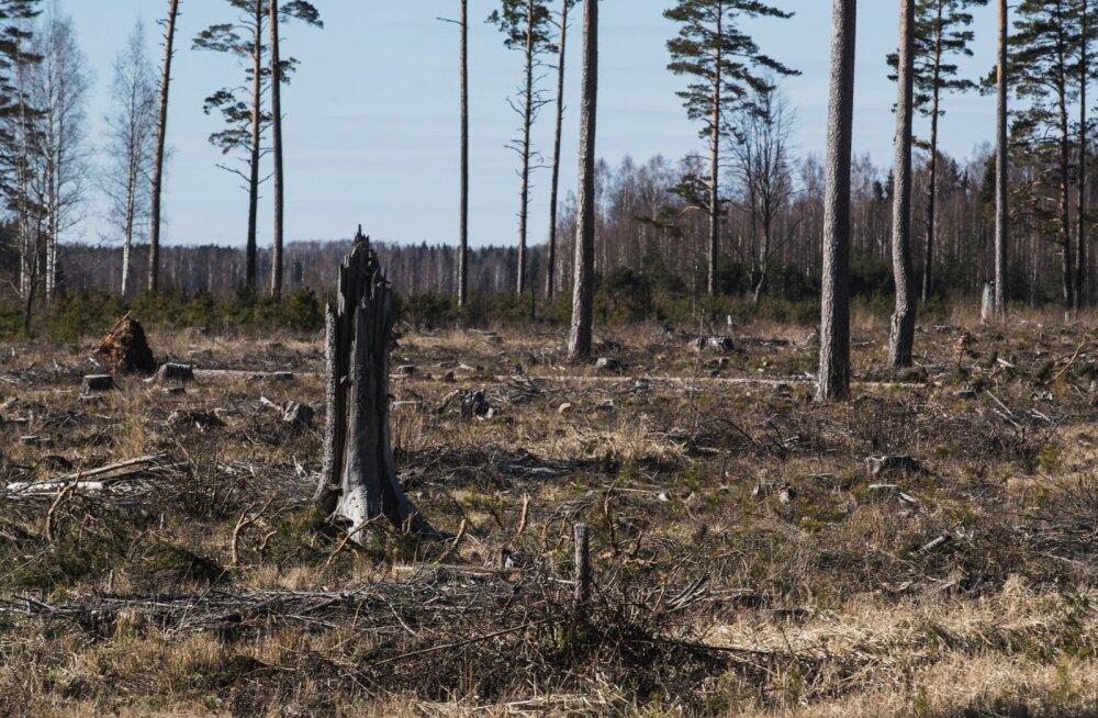 Metsade lageraie teede ääres
