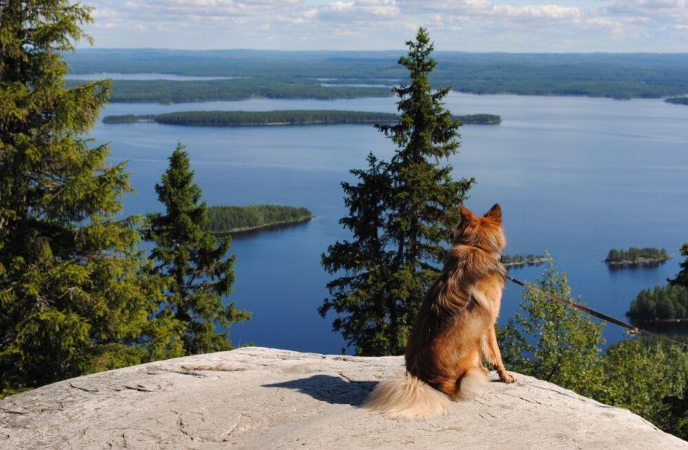 Maakodu lugejareisid Soome 2015 august