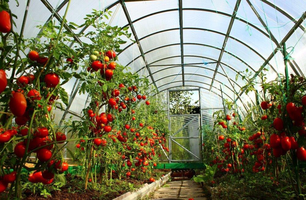 Millist kasvuhoonet valida?