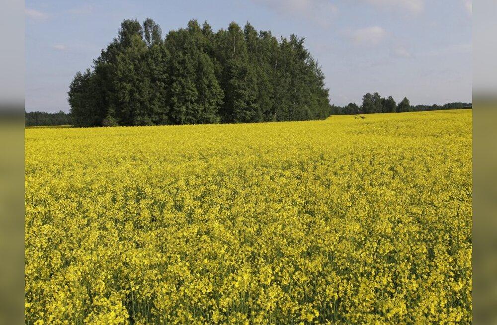 Parimad viljakasvatajad tegutsevad Tartu- ja Saaremaal