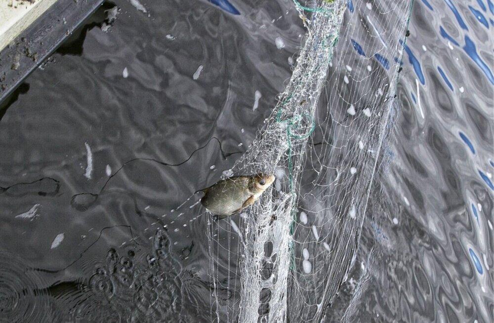 Peipsi järvest eemaldati salavõrke ning päästeti mitusada kilo kala