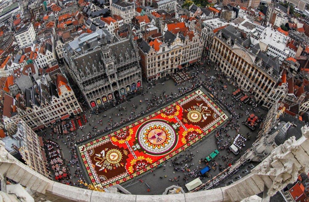 Brussel lillede vaip